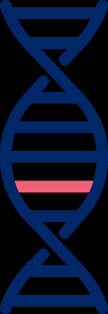 NIPT DNA
